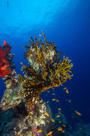 Tropical reef in the Red Sea photo