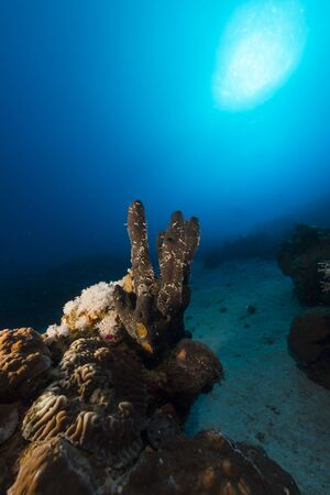 Tropical reef and fish in the Red Sea Stock Photo - 17579079