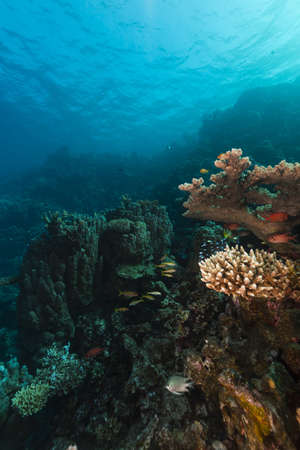beneath the surface: Tropical reef and fish in the Red Sea Stock Photo