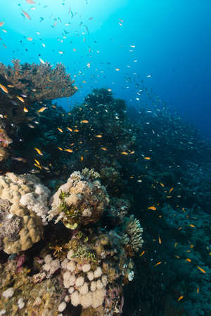 beneath the surface: Fish and tropical reef in the Red Sea