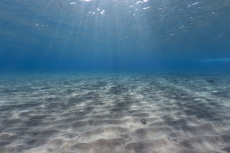 Tropical waters of the Red Sea