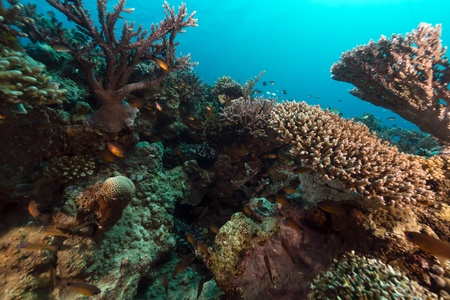 The tropical waters of the Red Sea