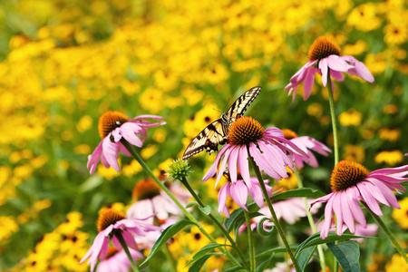 Butterfly in Field of Flowers Stok Fotoğraf