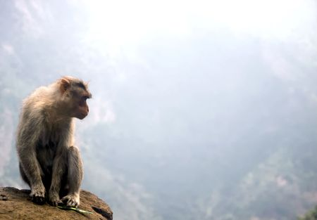 Monkey at a Abyss near Coonoor,India