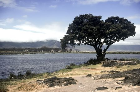 Lake and tree in Ngorongoro Crater,Tanzania photo