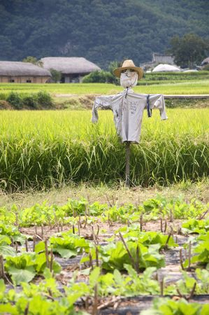 Scarecrow on a rice field in South korea