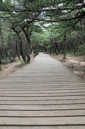 Plank way in Gyeongju National Park in South Korea