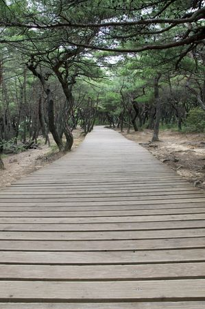 Plank way in Gyeongju National Park in South Korea