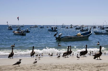 Pelicans on the beach of Puerto Escandio, Mexico Stock Photo