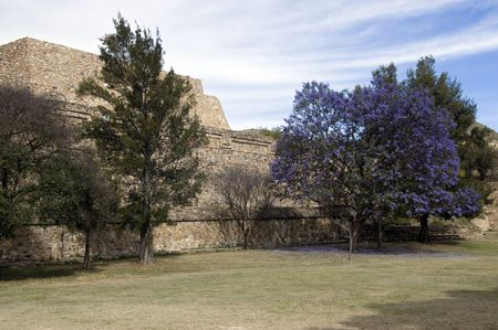 Flowering tree in front of a temple in Monte Alban, Mexico Stock Photo - 6561430