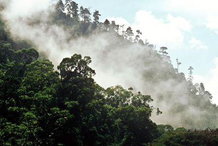 Rising mist in the rain forest of Guatemala