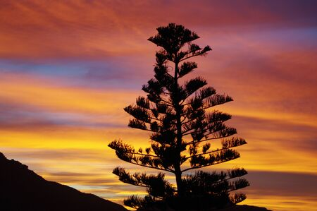 Rainbow colours in the sky at sunrise with tree silhouette Stock Photo