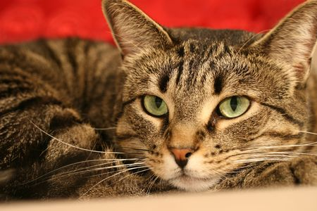 A close up of a tabby cat with green eyes Stok Fotoğraf