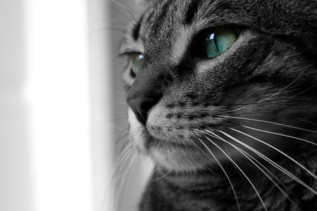 a black and white close up of a green eyed cat