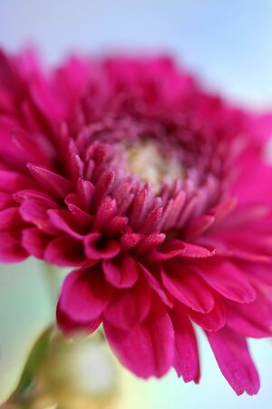 saturated color: An artistic macro flower photo with saturated color