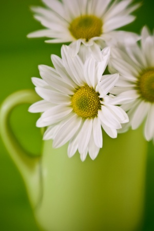 daisys: close up of daisys in yellow and green pastel colors