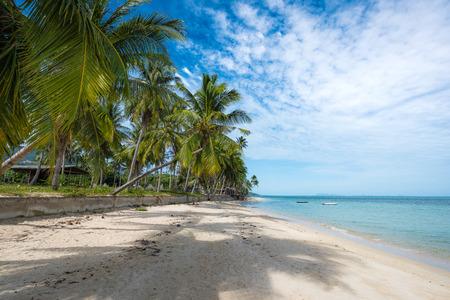 Drzewa kokosowe sięgają do morza