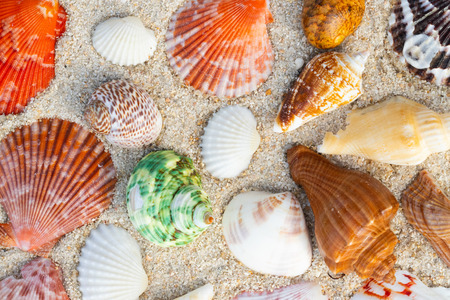 Sea Shell on sands. summer time background.