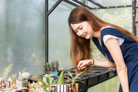 Young cute asian woman working in house plant. Asian female taking care of the tree in greenhouse. Startup small business work from home concept.