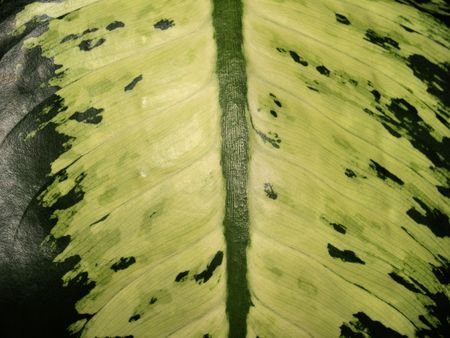 Exotic palm tree leave in detail