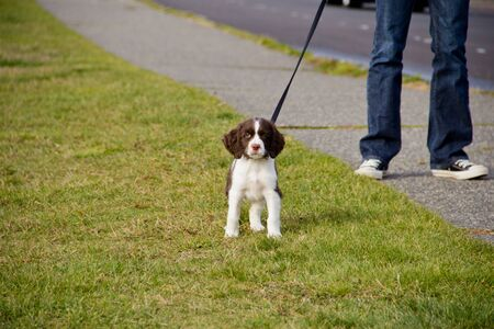 Young woman walks curious, energetic puppy