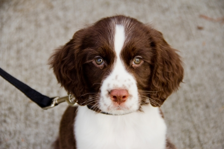 Cute, little puppy curiously looking forward photo