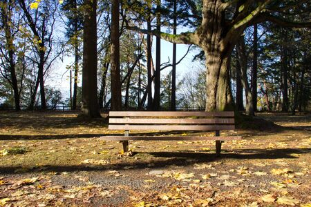 Single wood bench in leaf-covered area of a park in autumn