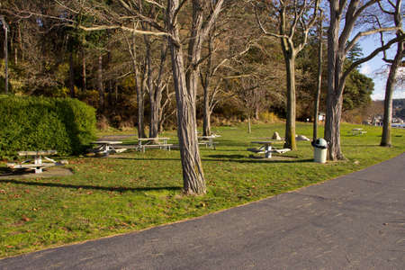 Trees and picnic tables at sunny park