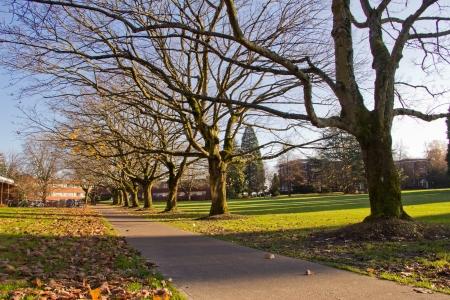 木が歩道の葉し、秋の影
