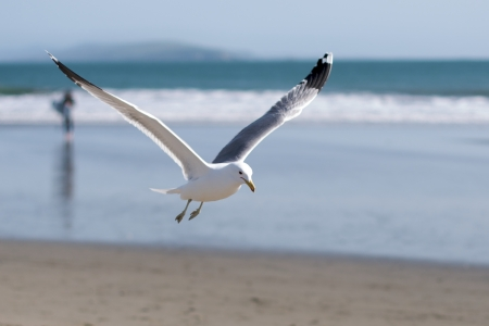 water s: A seagull flies near the water s edge Stock Photo
