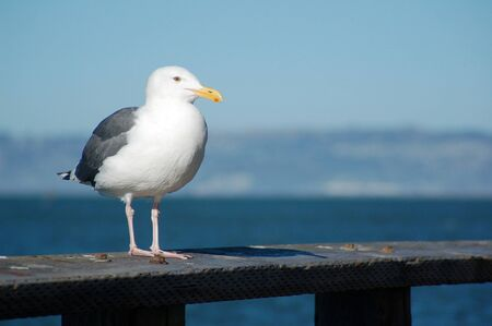 A seagull is perched on a wooden fence
