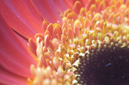 Extreme macro of red yellow flower