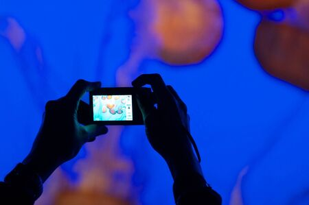 Person photographing jelly fish photo
