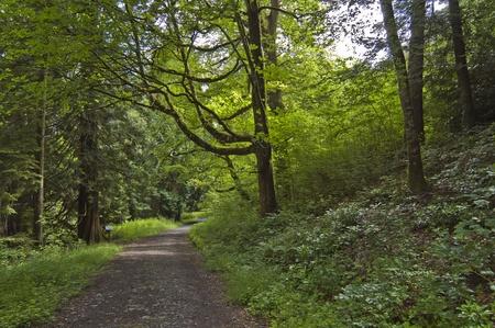 lave: Leafy lane, country-path, shot in Cavan, Ireland.