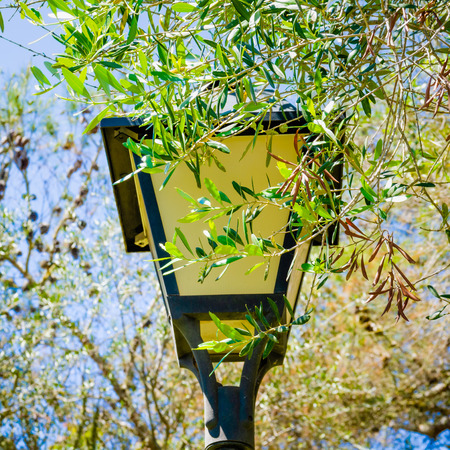 A decorative, lantern-styled, street lamp situated in a public park is encroached upon by a canopy of leaves from a nearby tree. Фото со стока - 122799383