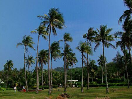 and sanya: Sanya, Hainan, beach, sunset, coconut, coconut trees, dusk, quiet Stock Photo