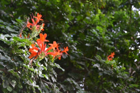 orange flowers with green leafy background Stock fotó