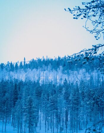 layers of blue trees
