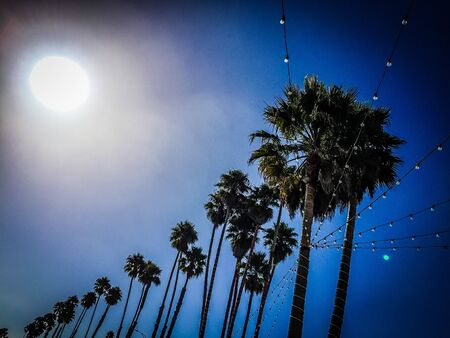 lights and palm trees against a bright blue sky