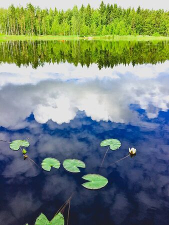 lily pads in the reflection of the blue sky