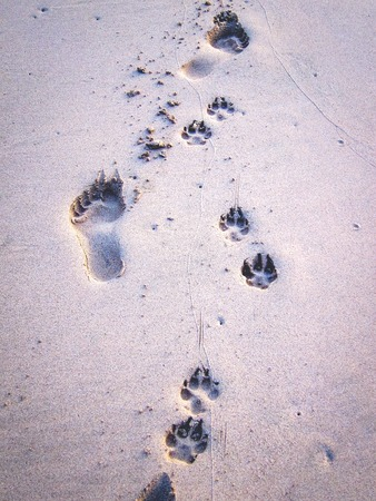 Man and dog footprints in sand