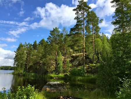 peaceful summer forest retreat Stock Photo