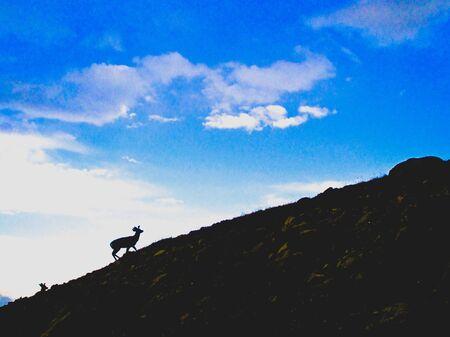silhouette of a deer climbing a mountain
