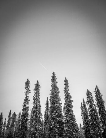 solitary snowy trees in the arctic Stock Photo