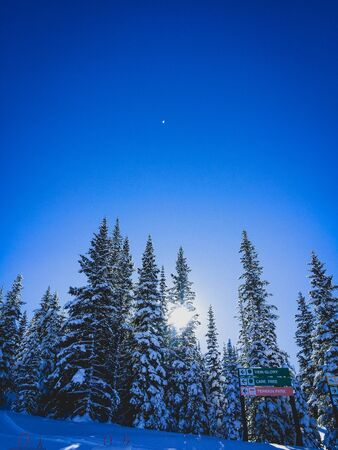 sun shining through the trees on a ski hill