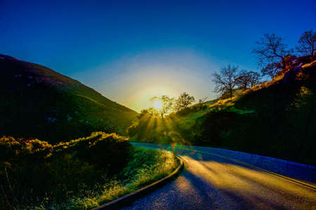sun shining through tree onto winding road