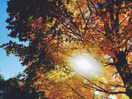 sun streaming through a colorful tree