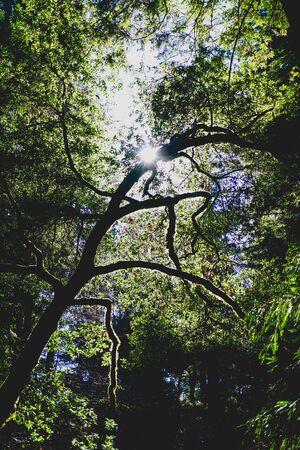 sunlight silhouetting a twisty tree