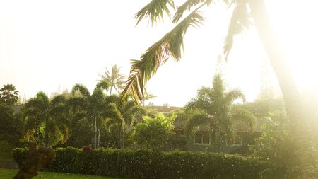 sunlight through a palm tree while raining Stock Photo