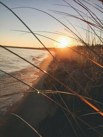 sunset shining through tall grass on the coast